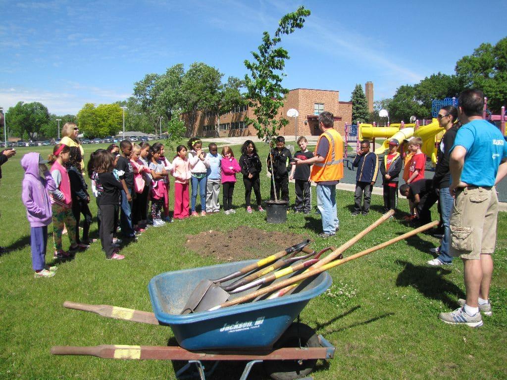 Tree Education in Schools